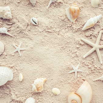 Top view of shells on beach. summer concept