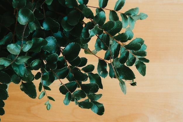나무 배경에 가짜 녹색 식물의 상위 뷰 샷