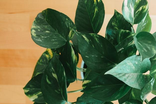 나무 배경에 녹색 식물의 상위 뷰 샷