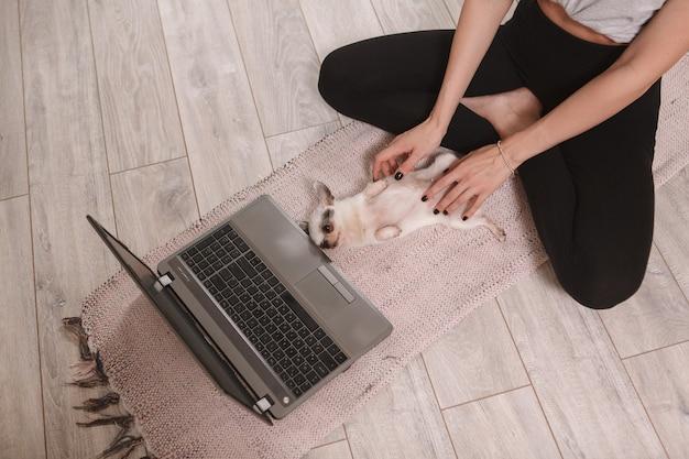 自宅で仕事をしながらかわいいチワワの子犬の腹をこすりながら女性の平面図のショット