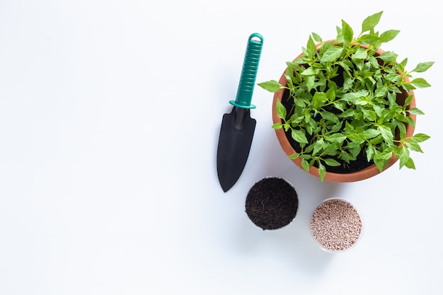 Top view shovel, soil, fertilizer and young fresh thai chilli tree in garden pot