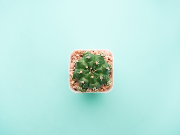 Top view small green cactus plant.
