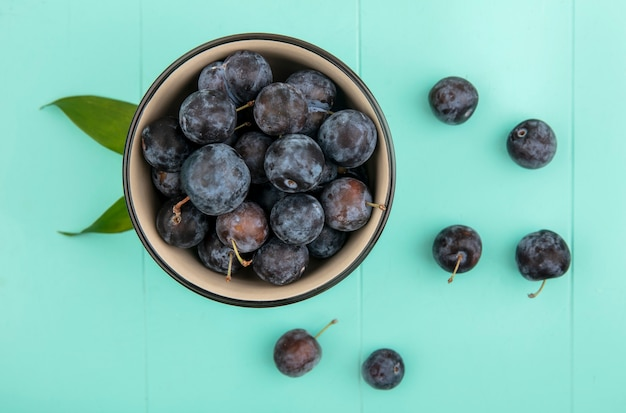 Top view of small sour dark purple fruit sloes on a bowl with sloes isolated on a blue background
