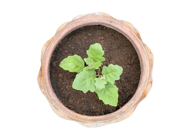 Top view of small tree plantation in