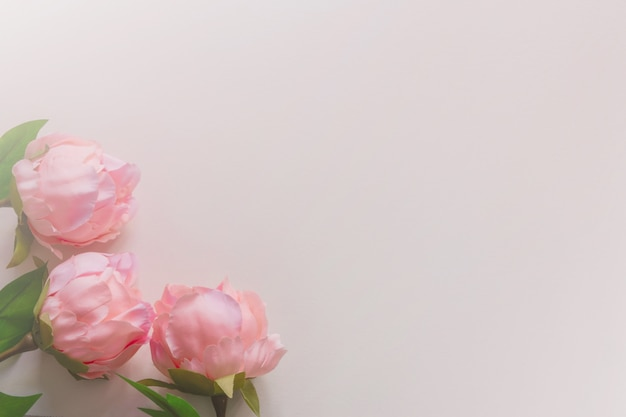 Top view of soft tone pink peonies artificial flowers on blank background