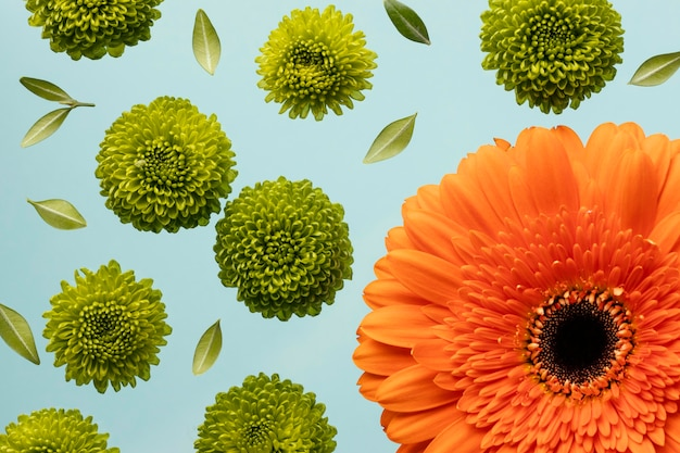 Top view of spring daisies and gerbera