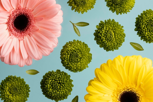 Top view of spring daisies and gerberas