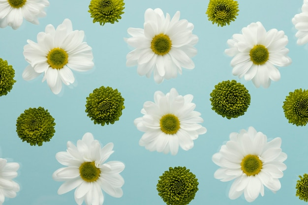 Top view of spring daisies