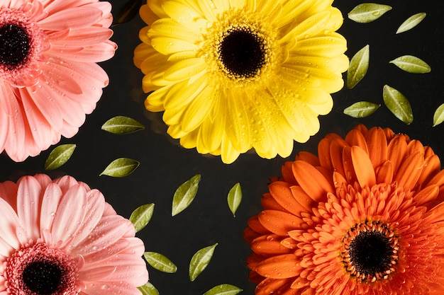 Top view of spring gerbera flowers