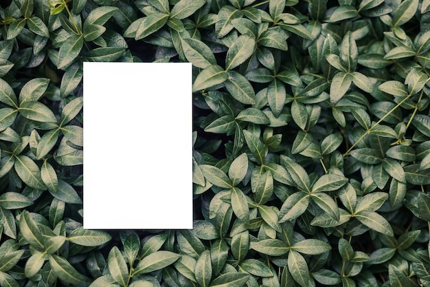 Top view of square frame creative layout of tropical plants and periwinkle leaves with sheet of pape...