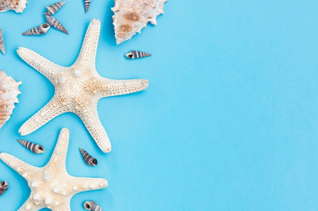 Top view of starfish and sea shells with copy space
