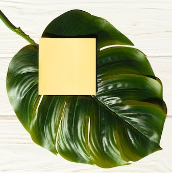 Top view sticky note on monstera plant