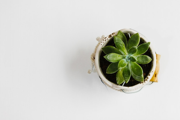 Top view succulent in a flowerpot
