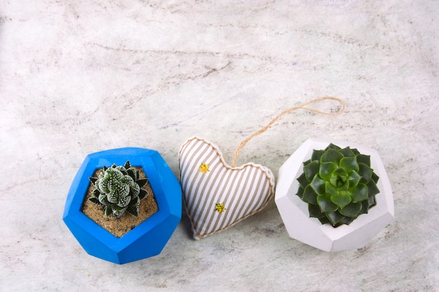 Top view succulents in concrete pots and stuffed toy heart on a marble background copy space