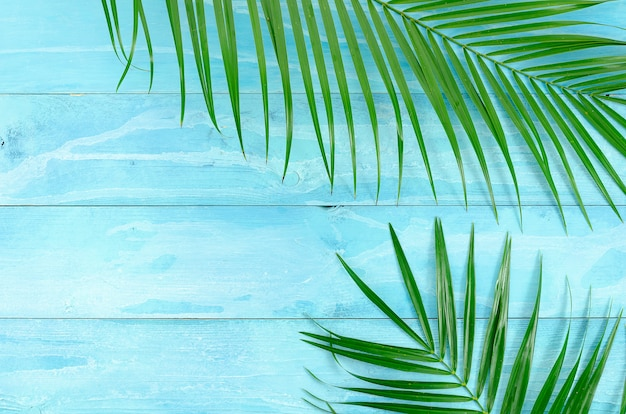 Top view summer background with palm tree