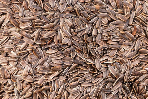 Top view sunflower seeds  surface