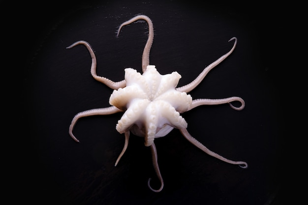 Top view of tentacles of raw cuttlefish over dark background
