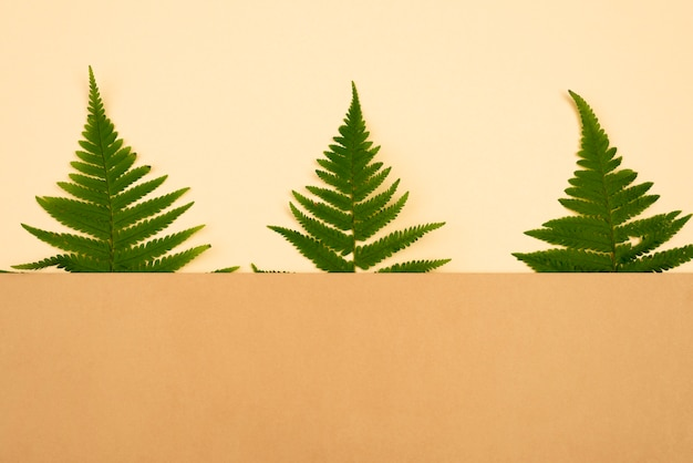 Top view of three ferns with copy space