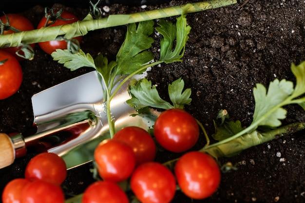 Vista dall'alto di pomodori con terriccio e cazzuola