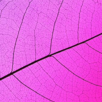Top view of translucent leaf texture with colored hue
