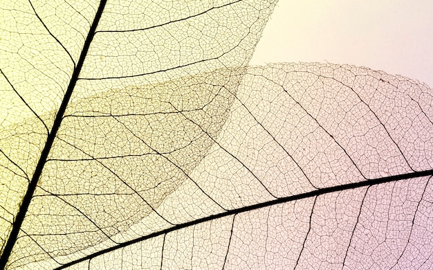 Top view of translucent leaves