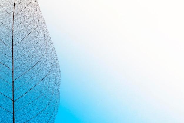 Vista dall'alto della trama della lamina fogliare trasparente