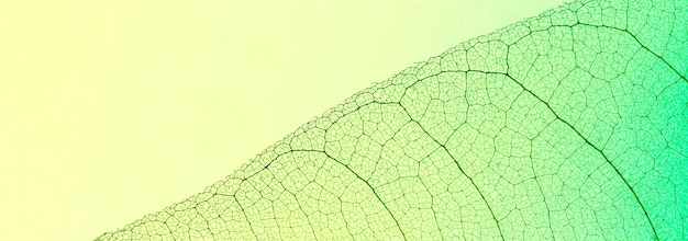 Top view of transparent leaf with multiple colors hue
