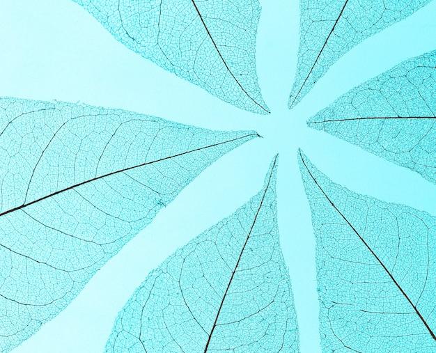 Vista dall'alto di foglie trasparenti texture lamina