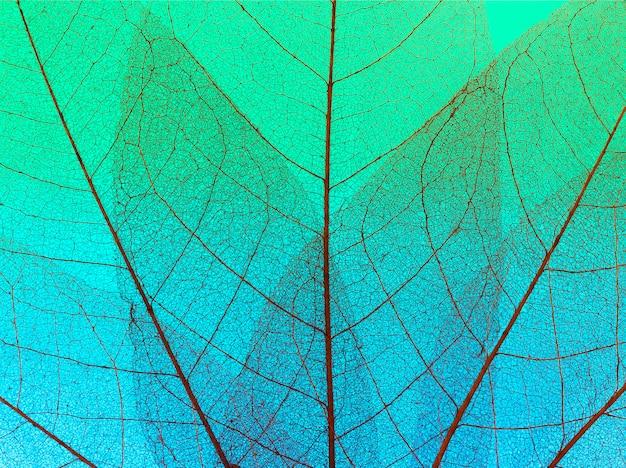Vista dall'alto della trama di foglie trasparenti