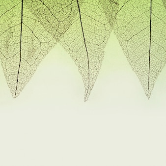 Top view of transparent leaves with colored hue