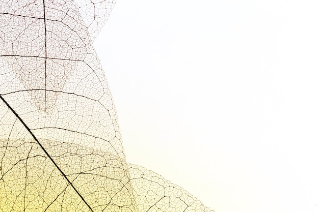Top view of transparent leaves with copy space