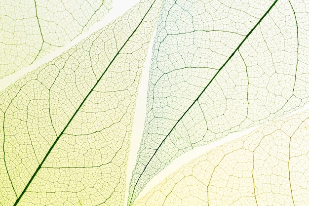 Top view of transparent leaves