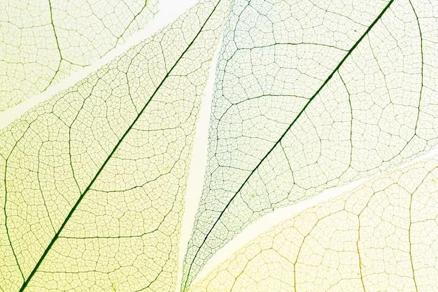 Vista dall'alto di foglie trasparenti