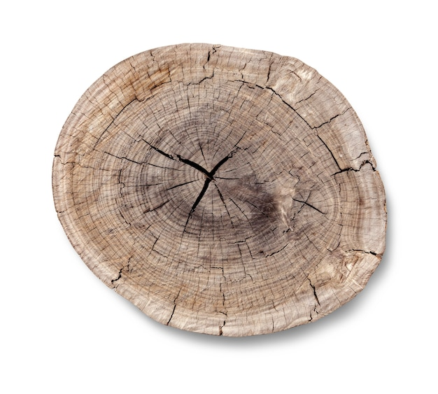 Top view of a tree stump isolated on white
