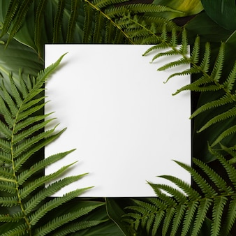 Top view of tropical fern leaves with copy space
