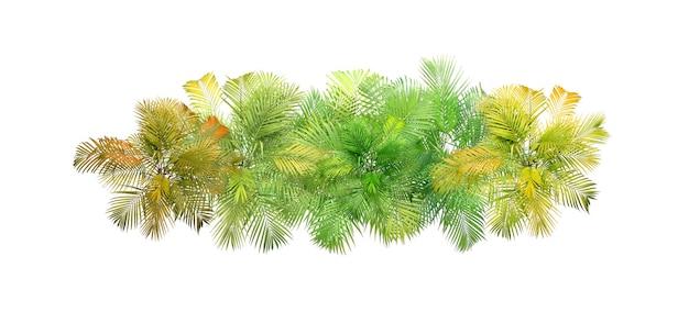 상위 뷰 열 대 잎 단풍 식물 부시 야자수 배열 자연 배경 흰색 배경에 고립