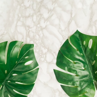 Top view tropical leaves on marble