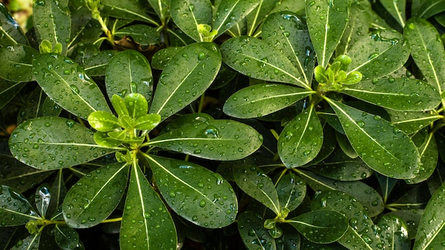 Top view of tropical leaves