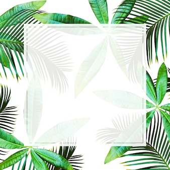 Top view tropical palm leaves background