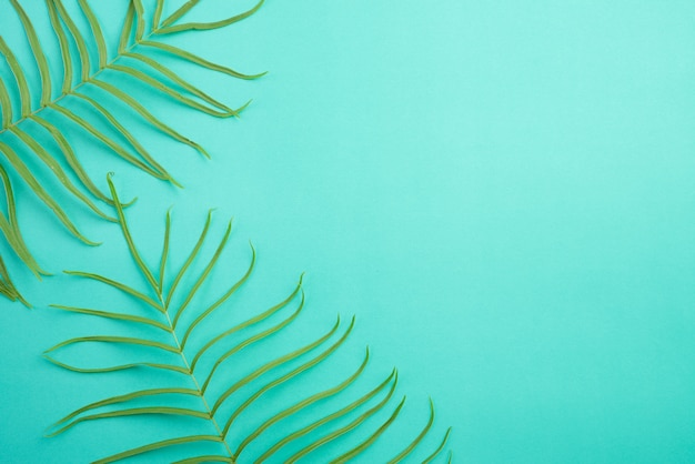 Top view of tropical summer on bright pastel green background, fern leaves