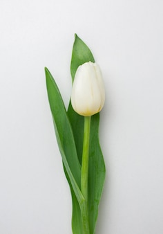 Top view tulips flower
