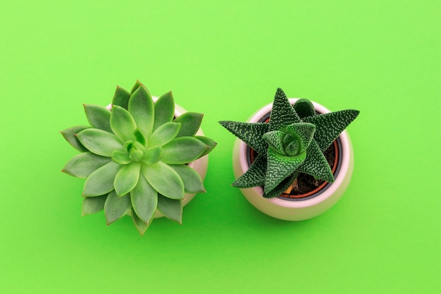 Top view of two green small succulent plants in pink pots