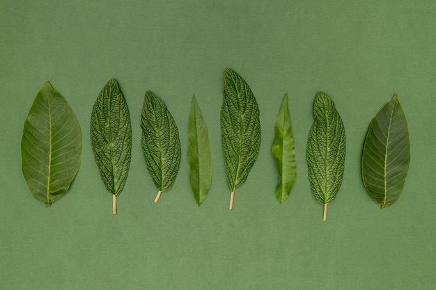 Top view variety of botanical leaves