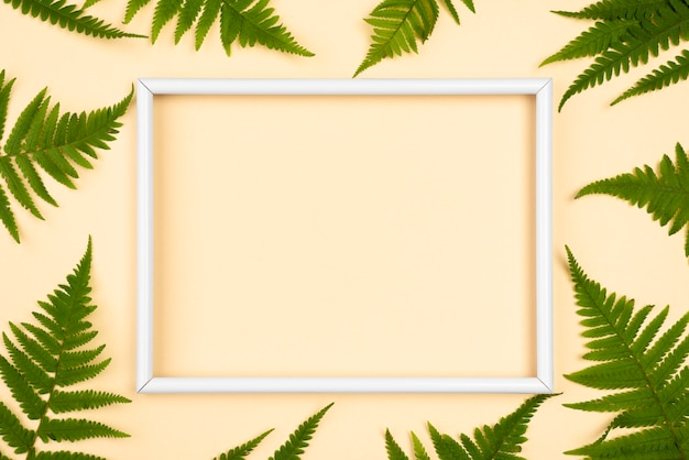 Top view of variety of fern leaves with frame