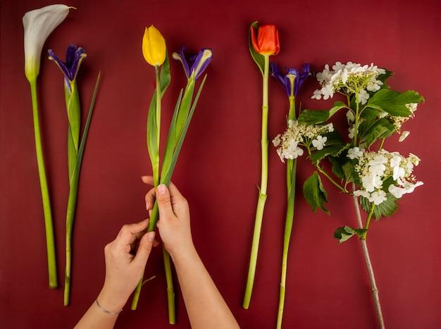 Vista dall'alto di vari fiori per bouquet come tulipani di colore rosso e giallo, calla, fiori di iris viola scuro e fioritura viburno sul tavolo rosso