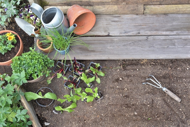 Top view on vegetable seedlings and aromatic plant on the soil to be planted   in a garden