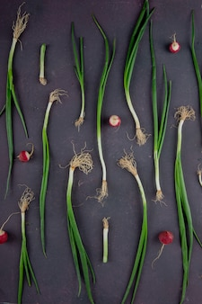 Top view of vegetables as scallion and radish on maroon background