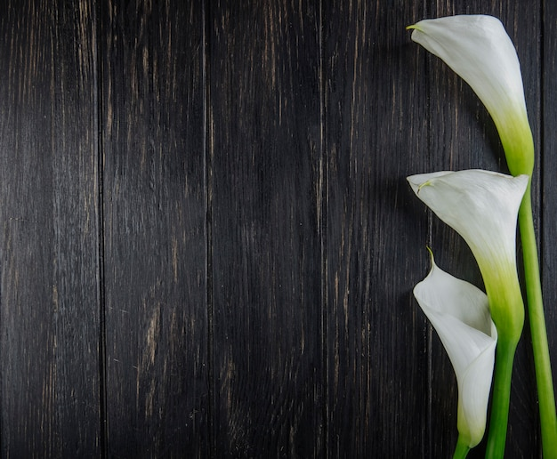 Top view of white color calla lilies isolated on dark wooden background with copy space
