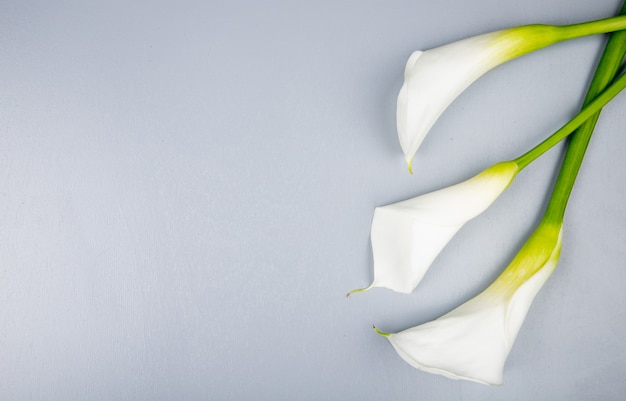 Top view of white color calla lilies isolated on white background with copy space