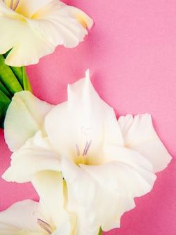 Vista superiore del fiore bianco di gladiolo di colore isolato su fondo rosa